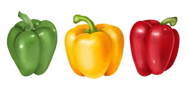緑、黄色、赤ピーマン、手描きイラスト、分離