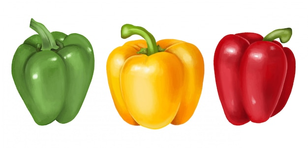 Green, yellow and red bell pepper, hand drawn illustration, isolated