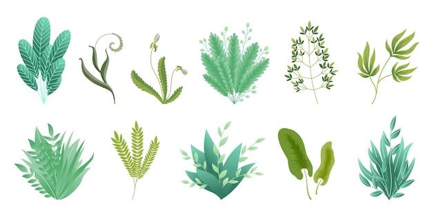 Зелень веток. зеленые реалистичные весенние травы. листья коллекции экзотических растений
