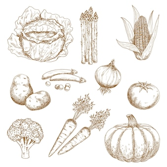 Овощной рынок, сельское хозяйство, книга рецептов или дизайн вегетарианской еды