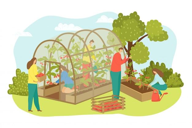 농장에서 온실 농업 공장, 농부 수확 그림. 사람을 위해 음식, 야채, 토마토로 농업. 필드에서 수확하는 노동자, 온실에서 남자 여자 자르기.