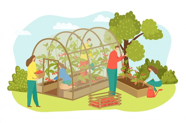 Greenhouse agriculture plant at farm, farmer harvest  illustration.  farming with food, vegetable, tomato for  person. worker harvesting at field , man woman crop in hothouse.
