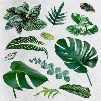 Набор тропических листьев gren