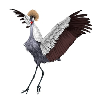 Grey crown crane bird in hand drawing