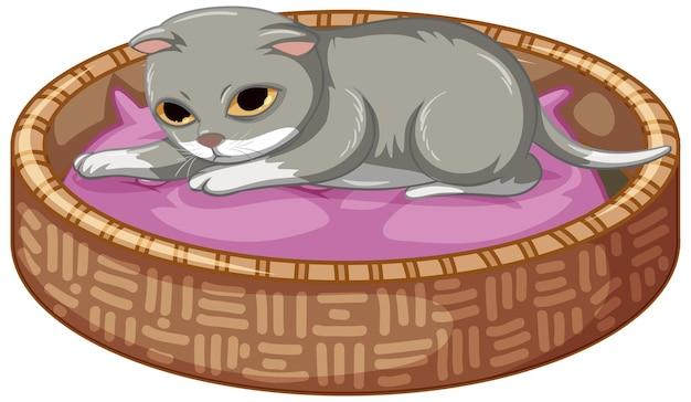 白い背景の上の彼のベッドに横たわっている灰色の子猫