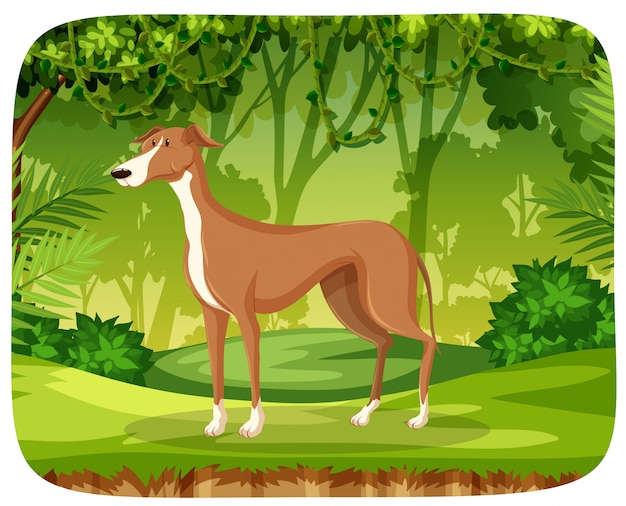 A greyhound in the jungle