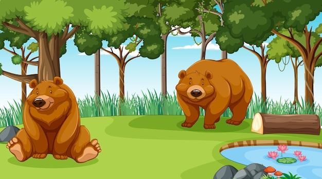 Медведь гризли или бурый медведь в лесу или сцена тропического леса с множеством деревьев