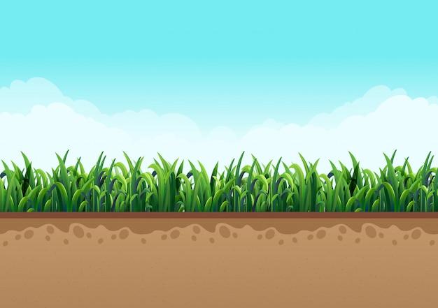 美しい雲と自然と空と一緒に緑の芝生で接地します。ベクトルイラスト