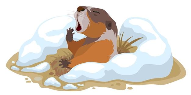 День сурка. сурок вылез из норы и зевает. иллюстрация в векторном формате