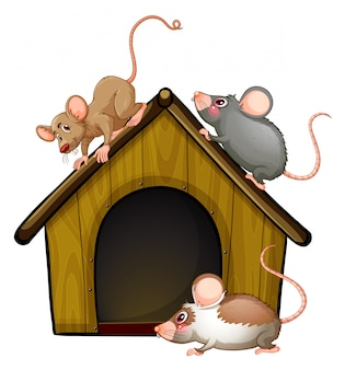 Group of cute mouses with little house isolated on white background