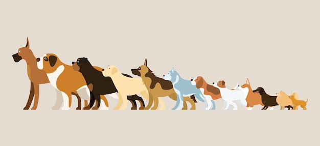 Group of dog breeds illustration side view arranged in height order