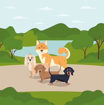 Group of dogs pets in the camp characters