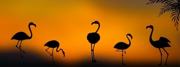 Group of flamingo silhouettes at sunset background