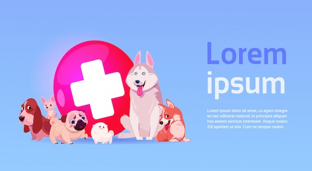 Group of happy dogs over vet clinic veterinary medicine concept
