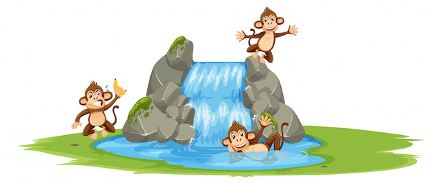 Group of monkey at the water