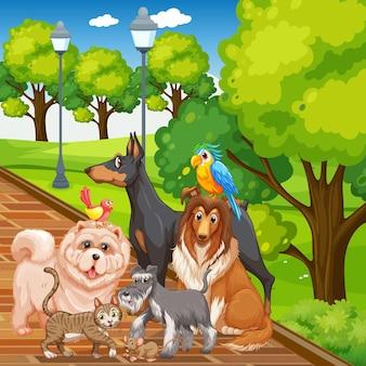 公園のシーンでペットのグループ