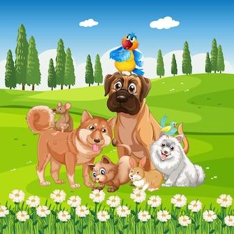 Группа домашних животных в парке сцены