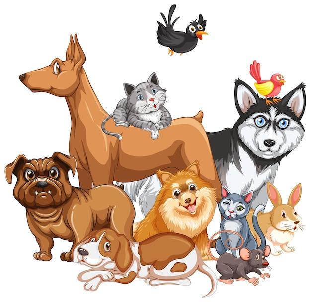 Группа домашних животных на белом фоне