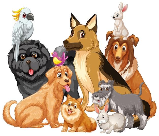 흰색 바탕에 애완 동물의 그룹