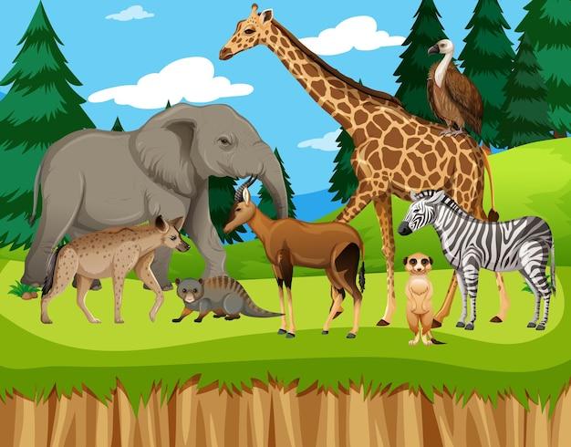 動物園の野生のアフリカの動物のグループ