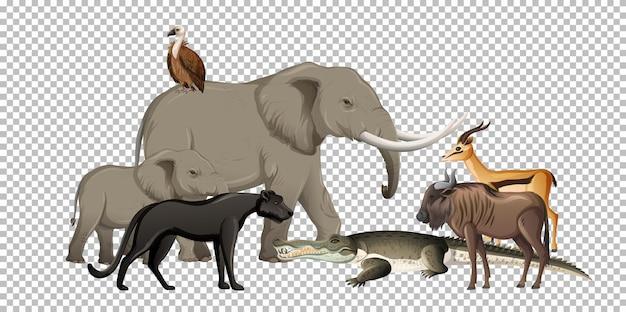透明な背景の上の野生のアフリカの動物のグループ
