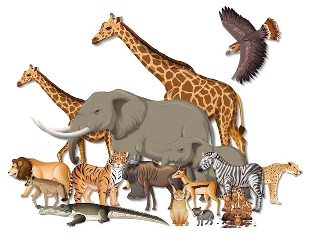 흰색 바탕에 아프리카 야생 동물의 그룹