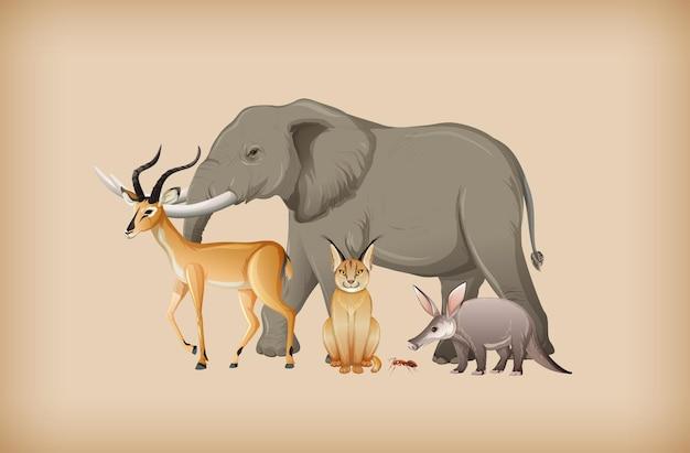 Группа диких животных на фоне
