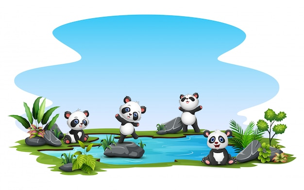 Group of panda in the pond