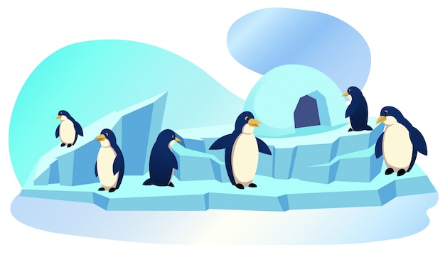 Group of penguins stand on ice floe with icehouse