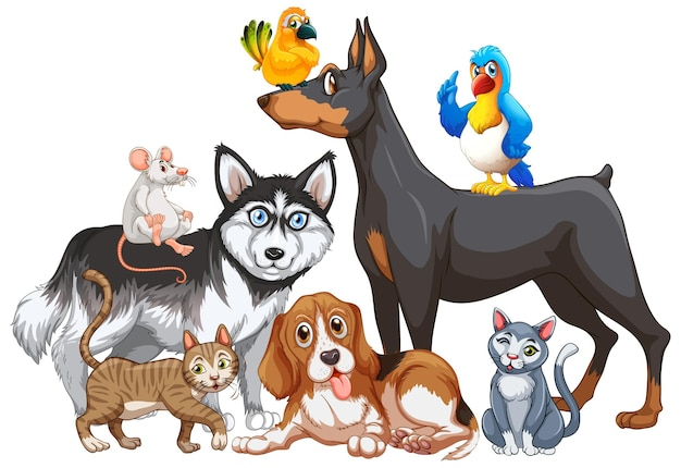Group of pet on white background
