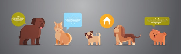 Group of purebred dogs furry human friends home pets collection concept cartoon animals horizontal