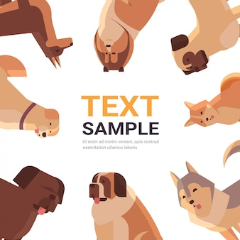Group of purebred dogs furry human friends home pets collection concept cartoon animals set portrait