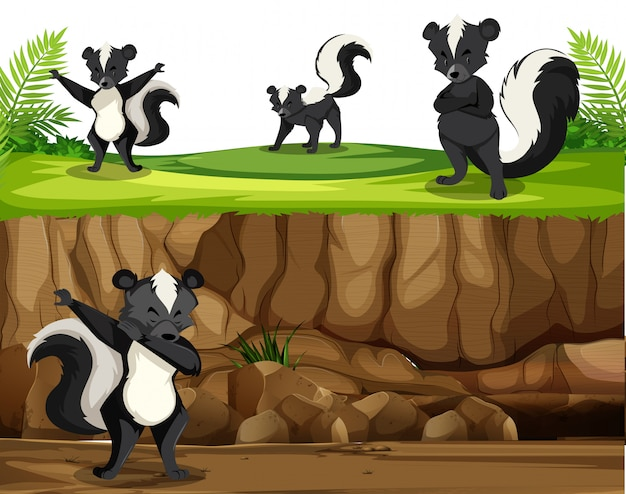 Group of skunk in nature