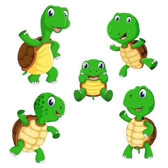 A group of turtle cartoon