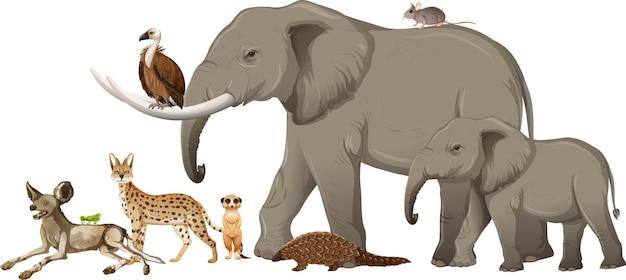 Gruppo di animali selvatici africani su sfondo bianco