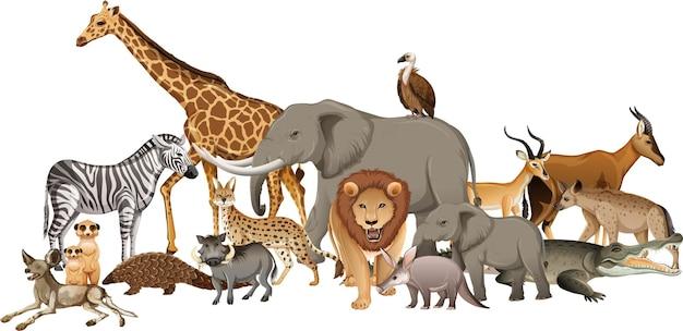 Gruppo di animali selvatici africani su bianco