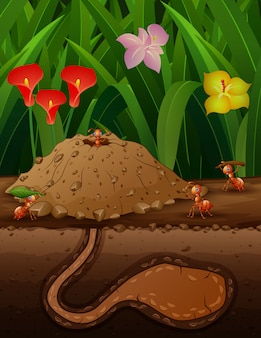 A group of working ants in the ground