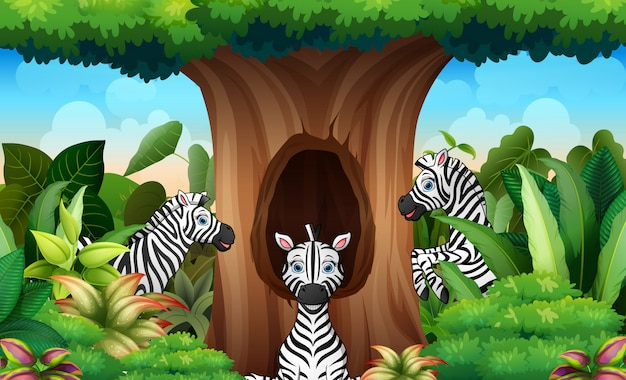 A group of zebra looking a hollow tree