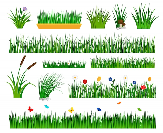 Growing grass isolated for garden