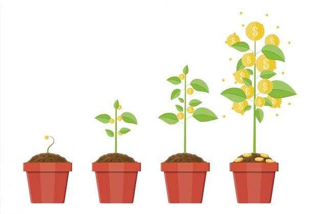 成長している金のなる木。成長の段階。