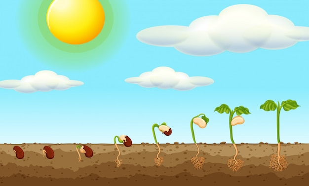 땅의 씨앗에서 자라는 식물