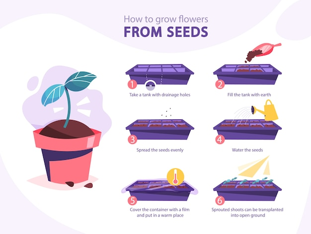 Growing a plant guide. how to grow a flower step-by-step