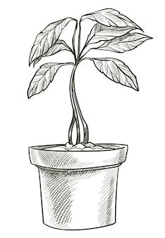 냄비에 자라는 식물, 잎과 줄기가 있는 관엽식물과 같은 고립된 나무