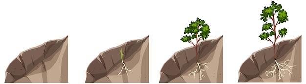 Этапы выращивания растений, изолированные на белом фоне