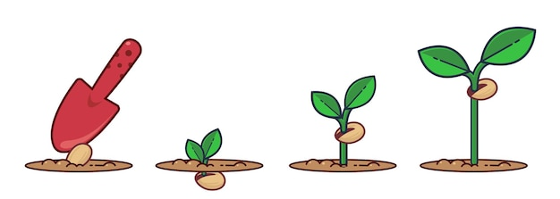 Growing plant stages seeds sprout and flower grown plant flat cartoon illustration of plant