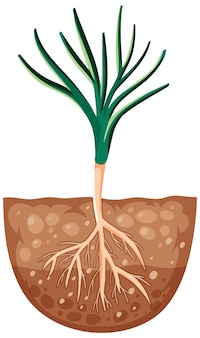 Growing plant with roots in soil