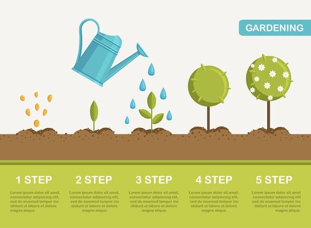芽から花まで、地面での植物の成長。植樹。苗の園芸植物。タイムライン