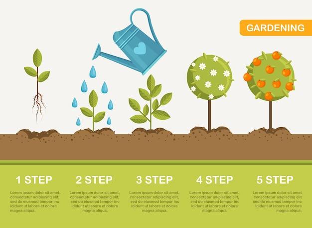 芽から果実まで、地面での植物の成長。植樹。苗の園芸植物。タイムライン