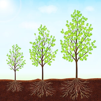 Growth of the tree vector background