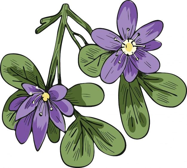 白で隔離されるガイアカムベクトルイラスト。 lignum-vitae、guayacan、またはga ac、青い花と緑の葉。